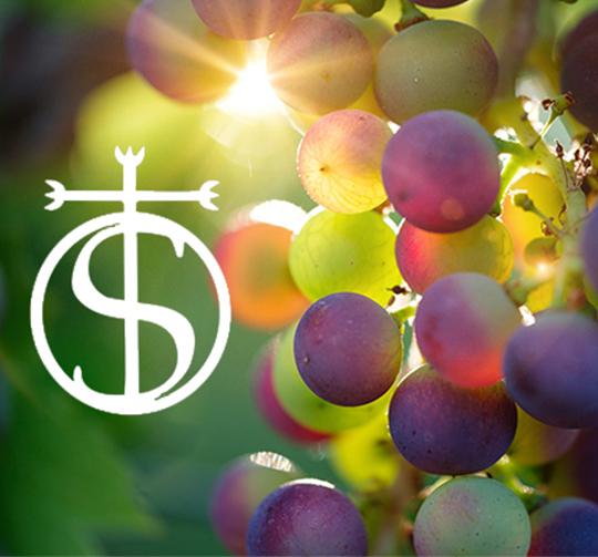Domaine saint andre saint gilles degustation de vin nimes vingt c est le vin