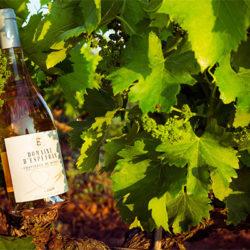 vin rouge et rose domaine d espeyran saint gilles gard nimes atelier des halles degustations